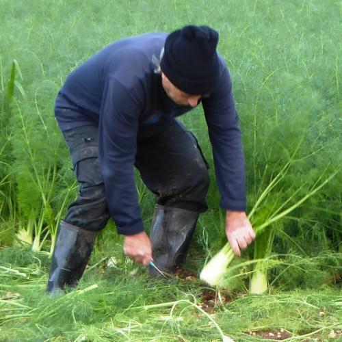 חקלאים בשטח